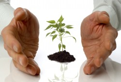 business men holding a plant between hands on white