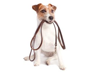 Kutyasétáltatás- a dolgozatírás része!