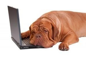 Dog - szomorú