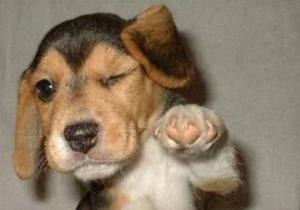 wink-puppy